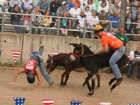 ACF donkey buck